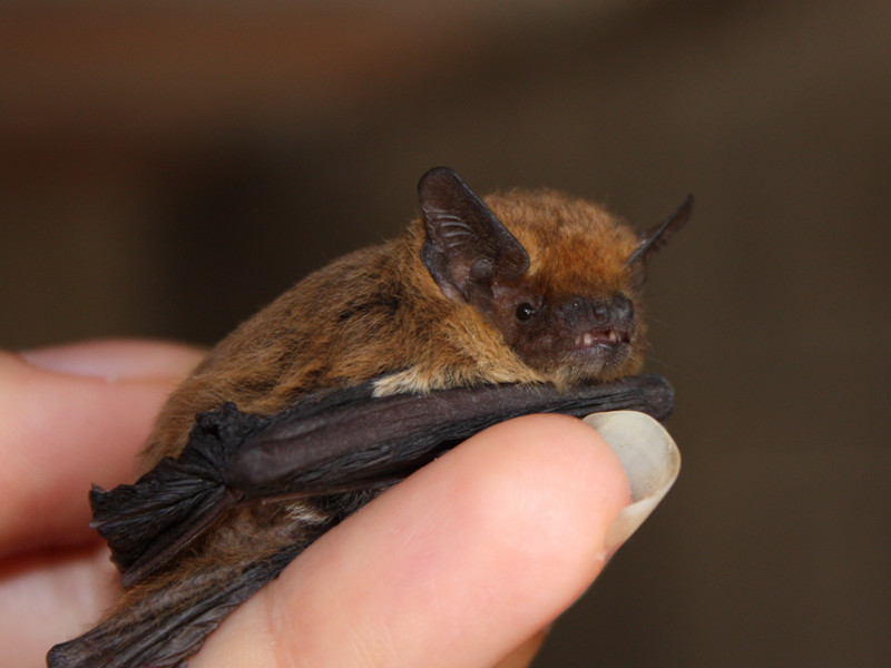 humans_and_bats